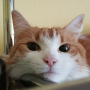 yolka_zuryan's Profile Photo
