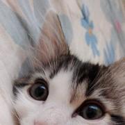 youmnaAlb's Profile Photo