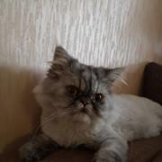 xhamster6's Profile Photo