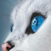 AneskaKinaan's Profile Photo