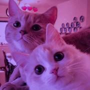 omnia_rhman's Profile Photo