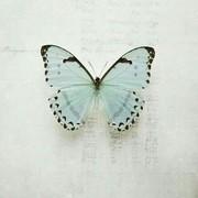 eman45547809's Profile Photo