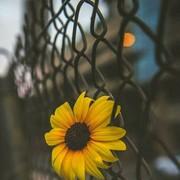 Sahar_Ebrahim's Profile Photo