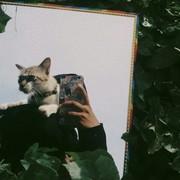 Meow11111111111111's Profile Photo