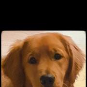 halask2000's Profile Photo