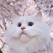 lili_qa's Profile Photo