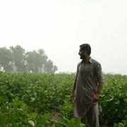 syedasadtayyab's Profile Photo