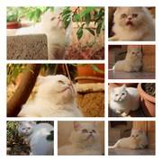 shoshoayran9's Profile Photo