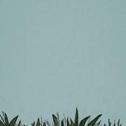 Zeynood's Profile Photo