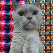 Vitalinka337's Profile Photo