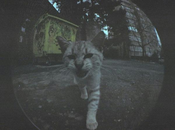 DanilAfanasev222's Profile Photo