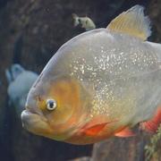Hunterwep's Profile Photo