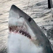 great_shark's Profile Photo