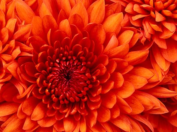 Zuzia6363's Profile Photo