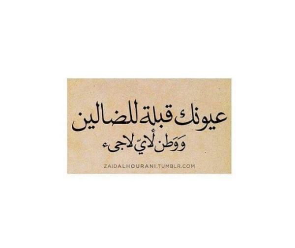 mesho_elshaikhy's Profile Photo