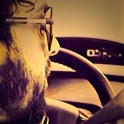 moazhamid's Profile Photo