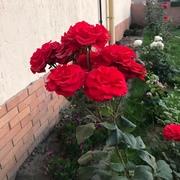 fatheysalam9146's Profile Photo
