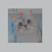 dina_baniissa's Profile Photo