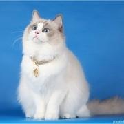 Anastasia_Gogol's Profile Photo