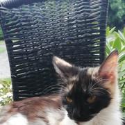 IIzabellaaaa's Profile Photo