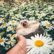 Juliya_Goncharova's Profile Photo