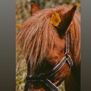 Dyala_Abu_Salah's Profile Photo