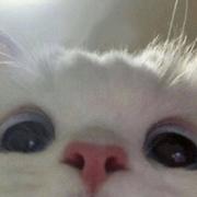 yxsiiiii's Profile Photo