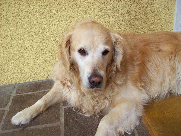 lenziiii25's Profile Photo