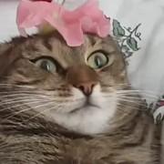 Lera42992's Profile Photo