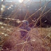 Sofia0818's Profile Photo