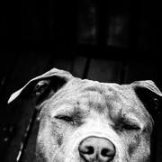 FIXELD's Profile Photo