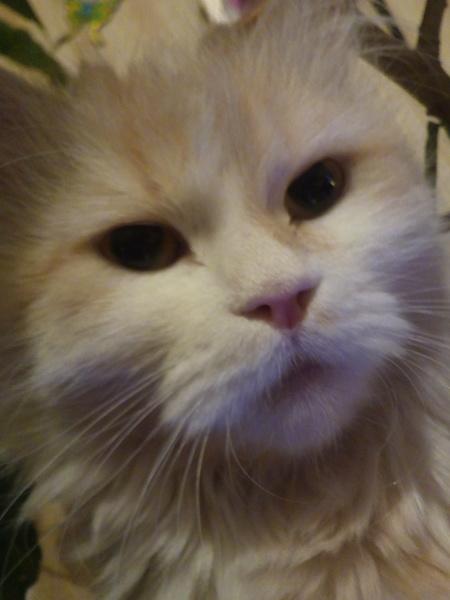 Wopic's Profile Photo