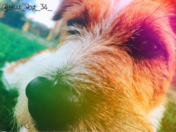best_dog_34_'s Profile Photo