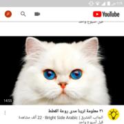 alyamenyalyameny's Profile Photo