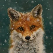 FoxBoxQuestion's Profile Photo