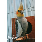 nadawahballah's Profile Photo