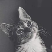 Ashraqat_alshrideh's Profile Photo