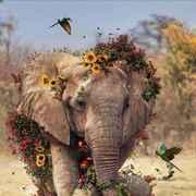 elephantlittle's Profile Photo