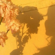 poymay_esli_smozhesh's Profile Photo