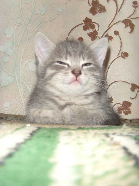 graf_cat_dracula's Profile Photo