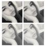 BexLauretaa's Profile Photo