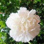 soso2988's Profile Photo