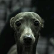 she_mo's Profile Photo