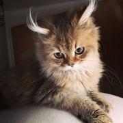 Meinionina's Profile Photo