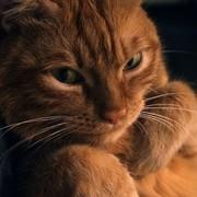 SeMbIoS's Profile Photo