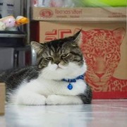 suriyapong_pulaeto's Profile Photo