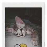 alivia_febriana's Profile Photo