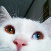 ineedcats_'s Profile Photo