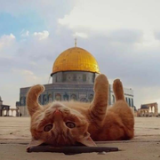 alaa_elkateb's Profile Photo