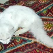 shahzain_862's Profile Photo